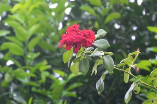 街角の花150814a_10121.JPG