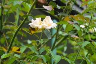 街角の花150814a_10124.JPG